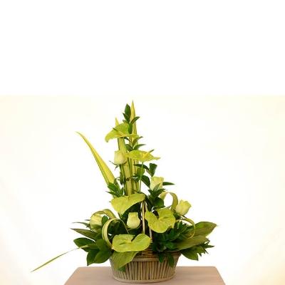 Picture of Emerald Jewel Arrangement
