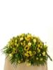 Picture of Serene Sunflowers Casket Spray