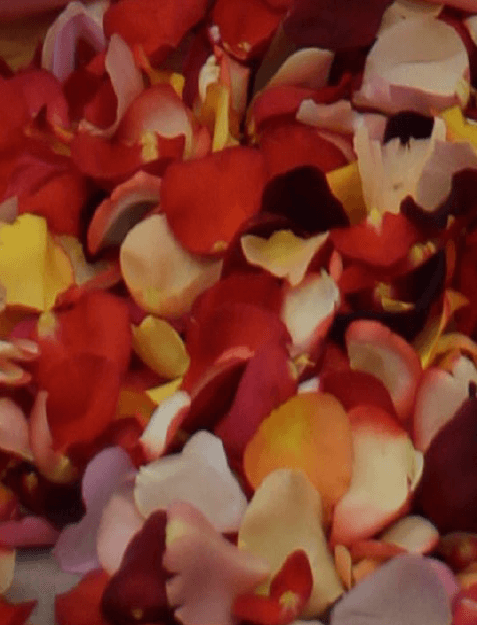 Picture of Scatter Petals